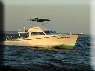 Chesapeake Bay Sport Fishing aboard the Compensation